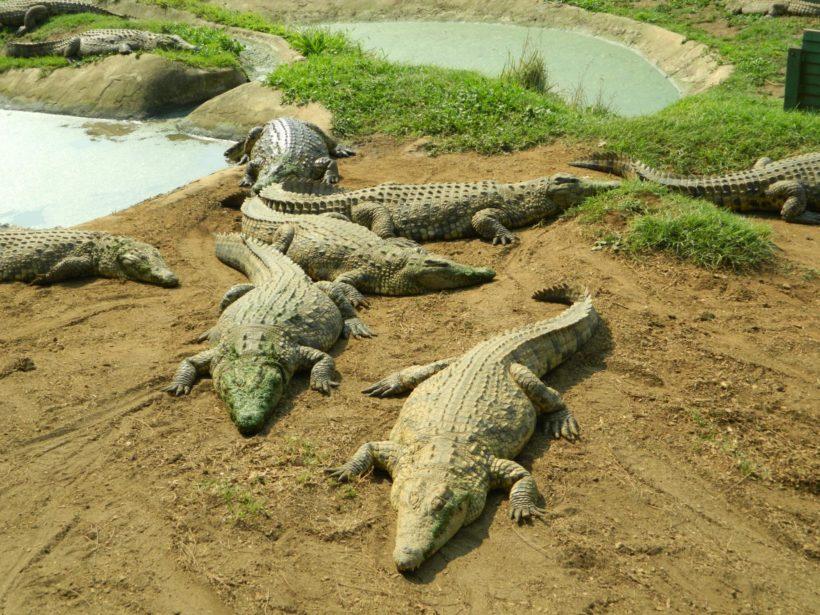 phezulu-safari-park (2)