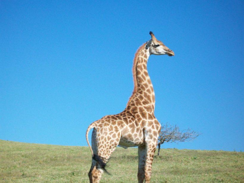 phezulu-safari-park