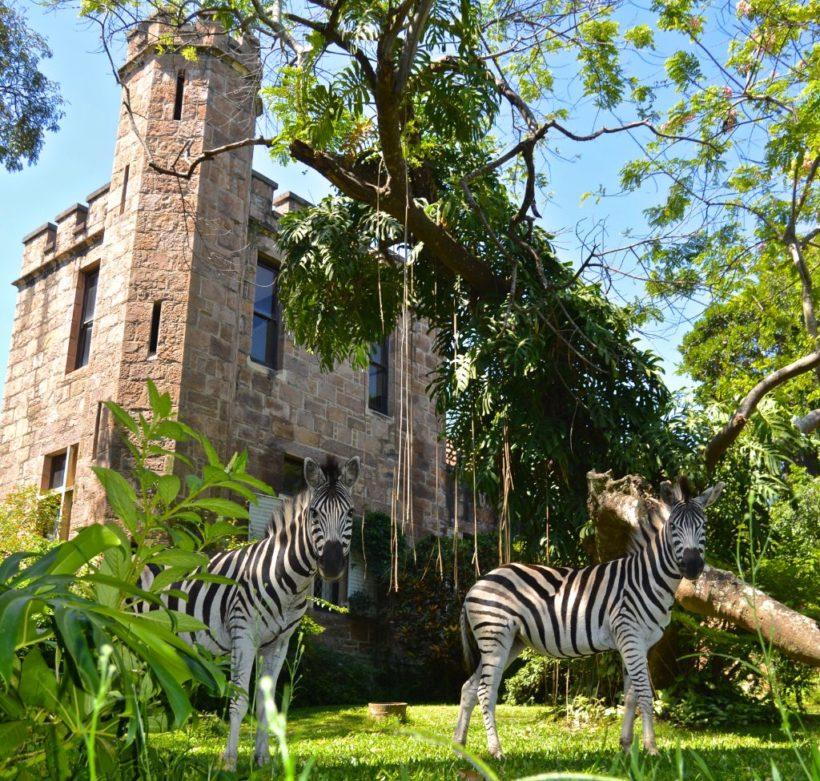 Castle-Zebra