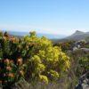 Peninsula_Sandstone_Fynbos_-_Cape_Town_8